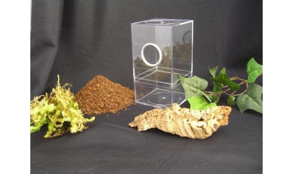 Arboreal Spiderling Enclosure Kit