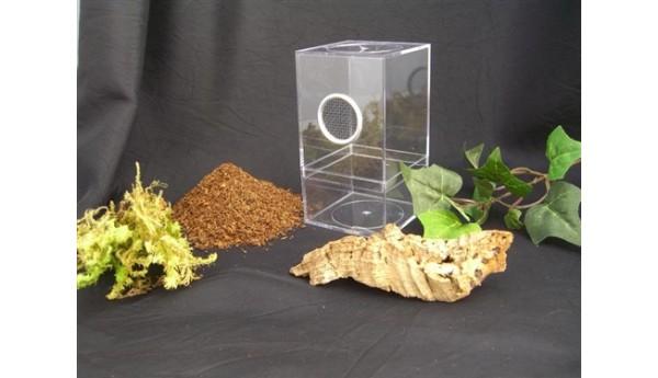 Arboreal Spiderling Enclosure Kit