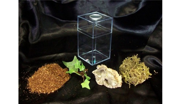 Terrestrial Spiderling Enclosure Kit