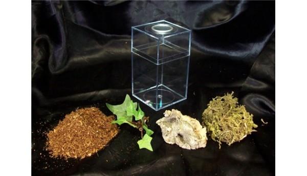Terrestrial Spiderling Enclosure Kit