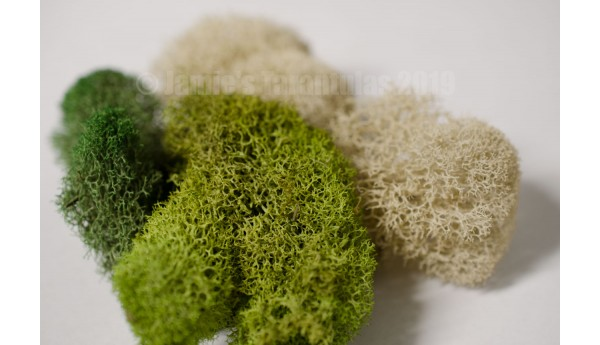 Reindeer Moss TRI-COLOR Half Quart
