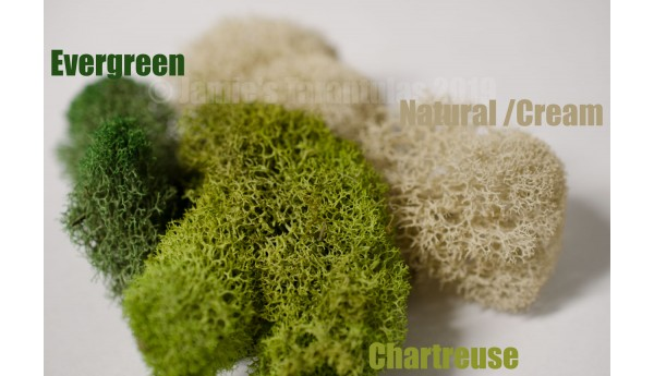 Reindeer Moss NATURAL / CREAM Half Quart