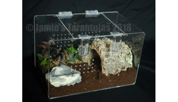 "7 x 7 x 11"" Adult Tarantula Cage - Cage Only"