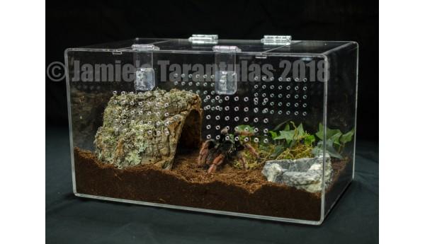 Complete Terrestrial Tarantula Cage