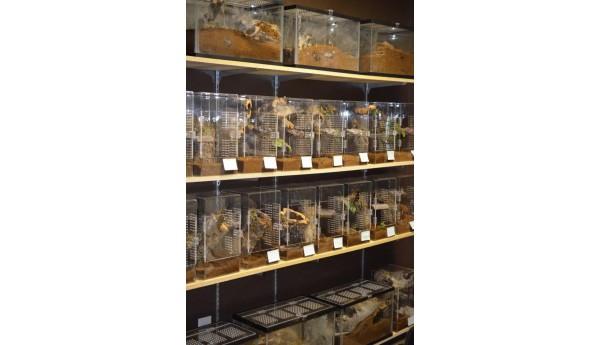 "8 x 8 x 14"" Adult Tarantula Cage - Complete Arboreal"