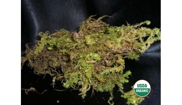 Sphagnum Tree Moss Quart (Organic)